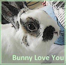Bunny-Kaninhop
