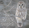 Photo de 25-Snowy-Wishes
