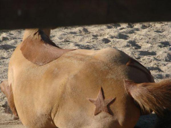 Blog de tontes44 super tontes pour vos chevaux du 44 for Tarif pour tondre pelouse