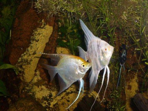 Bourse aux poissons du Club Aquariophile Châlonnais