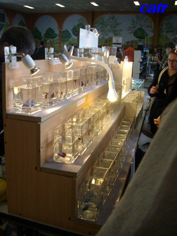 Bourse aux poissons : Mars 2012