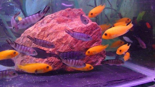 Bourse aux poissons du CATR du 30 Septembre 2012