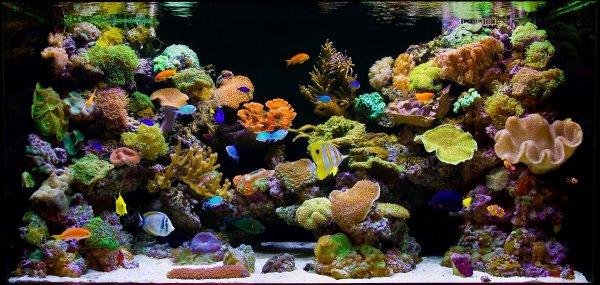 Exposé: Les coraux