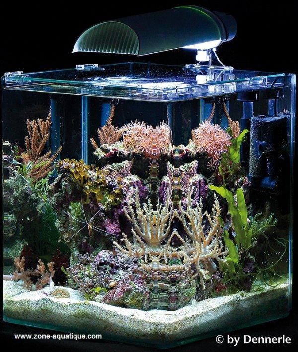 Exposé: Les coraux (suite)