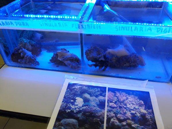 Compte-rendu de la Bourse aux poissons