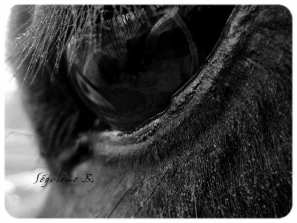 .  Celui qui prétend ne guère apprécier un cheval, ne peut prétendre le connaître. ♥ .