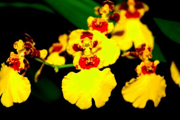 Toutes les fleurs de l'avenir sont dans les semences d'aujourd'hui.