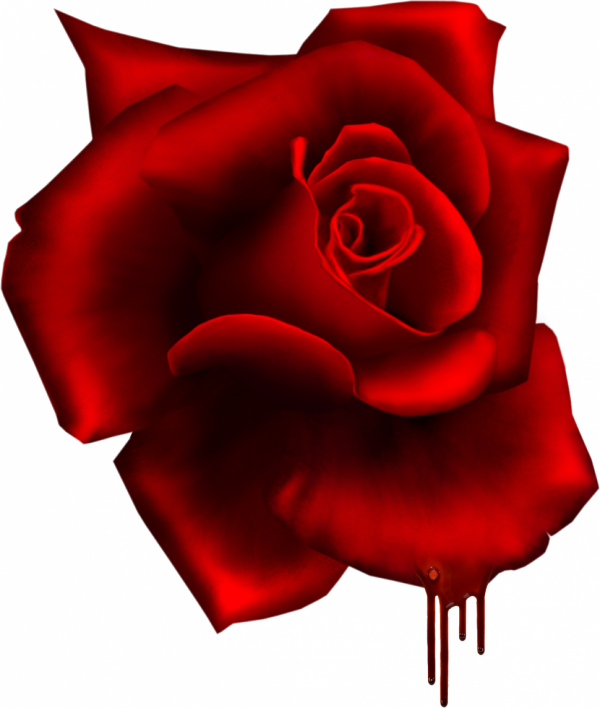 Une petite rose pour tous mes ami(e)Pour ceux qui aime vous pouvez la mettre sur votre blog!!!!