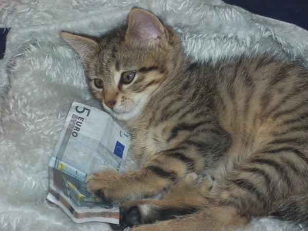 mon chat minouche
