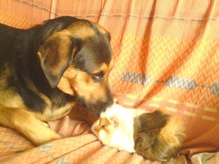 # L'amitié n'est pas une histoire d'espèce #