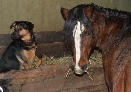 # L'extérieur du cheval exerce une influence bénéfique sur l'intérieur de l'homme #