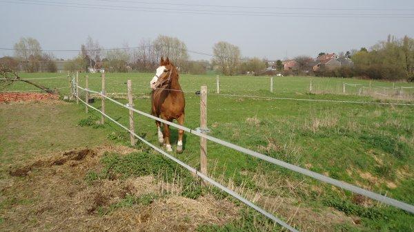 flip le doyen de l écurie et le 1 er cheval de béré <3