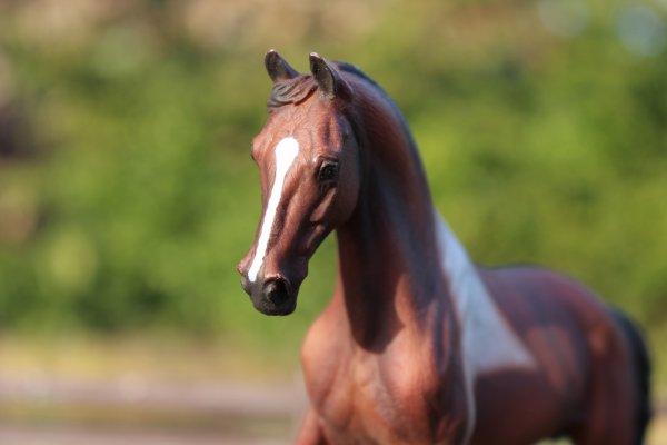 Faites du cheval un partenaire et non un esclave, vous verrez quel partenaire extraordinaire il est !
