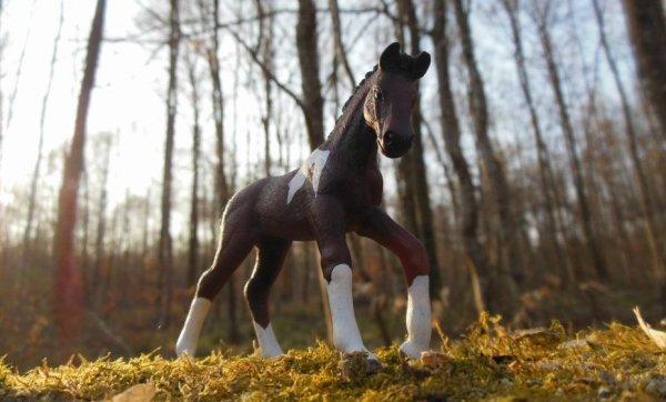 L'air du paradis souffle enre les oreilles d'un cheval~