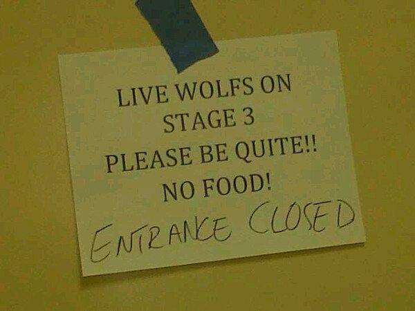 Michael Trevino va laisser sortir le loup qui est en lui !