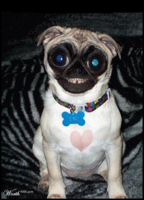 Chien gros yeux avec moi vous n 39 aurais que du lol - Animaux a gros yeux ...