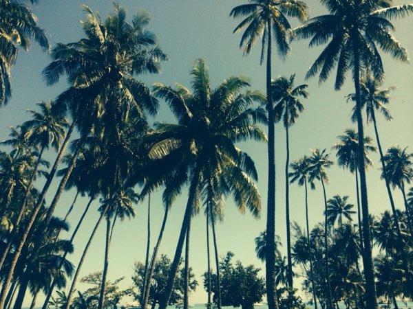Moorea, l'île où l'on décompresse par la nature