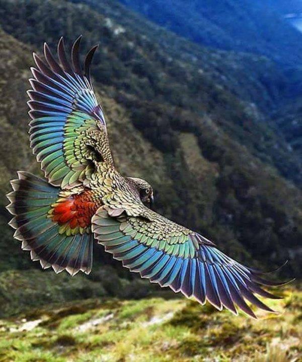 La Beauté en Air