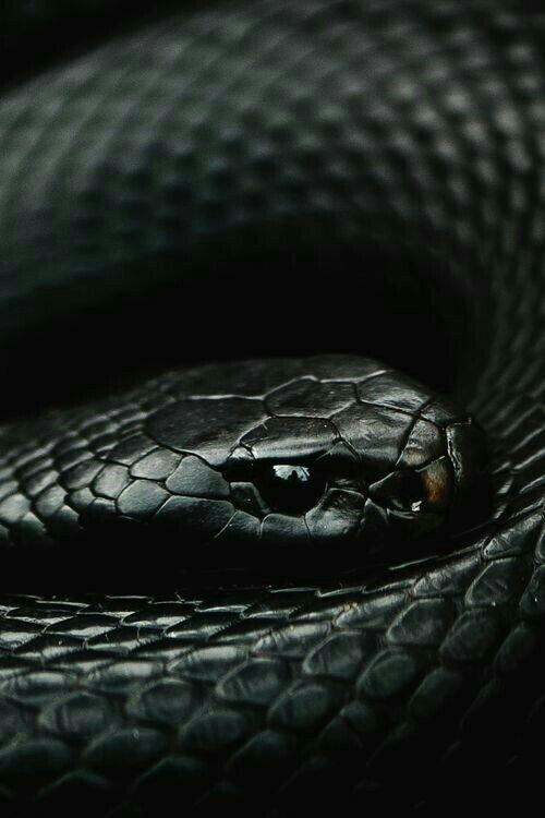 Jenna's snake.