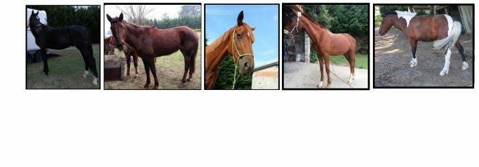 Les chevaux qui sont passer par les écuries