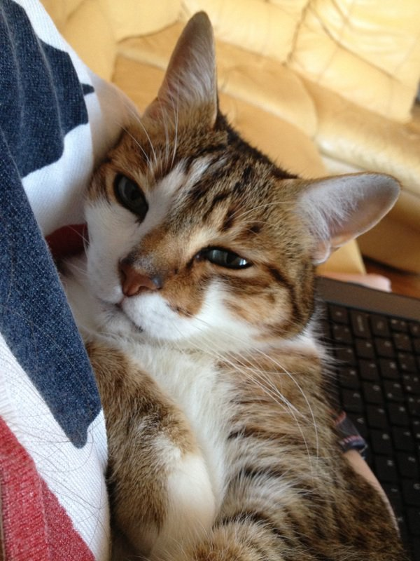 Mon pot de colle blog de follie d aurelie - Mon chat me colle plus que d habitude ...
