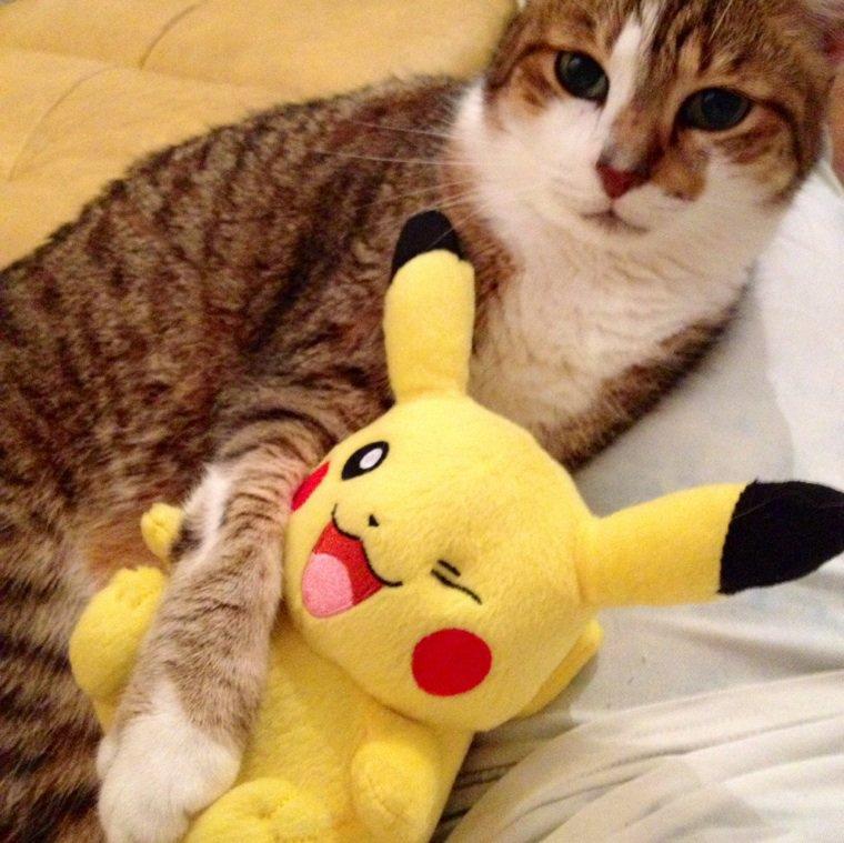 Le meilleur des chats avec mon Pikachu