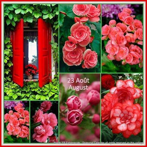 ** BONNE NUIT **  BONJOUR ~~~~ 23 AOÛT - Bonne Fête ROSE  ~~~~  Coucou ANNA