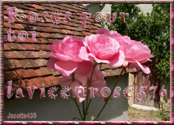~~(^v^)~~ CES PHOTOS de ROSES et ces CHOUETTES SONT POUR TOI MON AMIE ~~(^v^)~~ http://la-vie-en-rose-576.skyrock.com/ ~~(^v^)~~