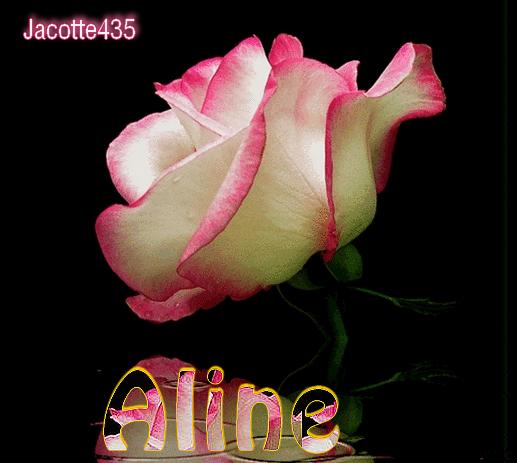 ~~(^v^)~~ DES ROSES pour VOUS - PRENEZ si vous AIMEZ ~~(^v^)~~ BONNE SEMAINE