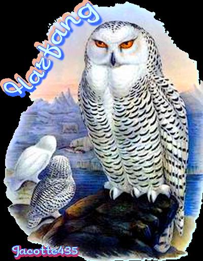 ♥ ☼ ♥ TEMPÊTE DE NEIGE (☼♥☼) UNE PENSÉE (☼♥☼) POUR NOS AMIS QUÉBÉCOIS ♥ ☼ ♥