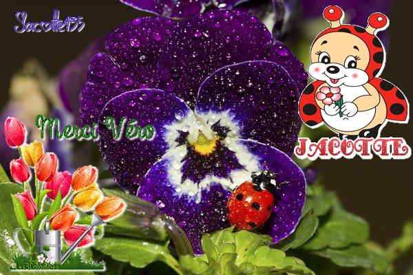 ~♥~ ♫ ☼ (☼♥☼) MERCI (☼♥☼) VÉRO (☼♥☼) POUR MES 70 ANS et 1 MOIS (☼♥☼) ☼ ♫ ~♥~ (☼♥☼) http://amina-princesse-reveuse.skyrock.com/  (☼♥☼)