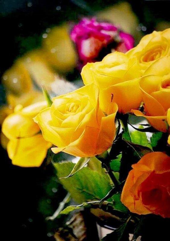 ~♥~ ♫ ☼ ♫ BALADE ~♥~ CHEZ JOSIE ♫ ~♥~ ♫ MERCI ~♥~ pour tes MERVEILLES ☼ ♫ ~♥~ ~♥~ http://josie2arles.skyrock.com/ ~♥~