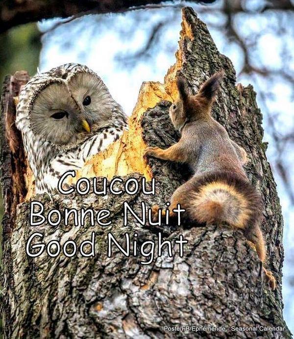 (☼♥☼) ♥ ♪ ♥ BONNE NUIT ♥ ♪ ♥ CHOUETTES ♥ ♪ ♥ CHIENS & CHATS DU NET ♥ ♪ ♥ (☼♥☼)