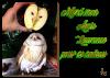 ♫ ☆ ♫ EFFRAIE & POMME ♫ ☆ ♫ MERCI LAURENCE ♫ ☆ ♫ FRUITS CHOUETTES ♫ ☆ ♫ ~♥~ http://savoir-aimer59.skyrock.com/ ~♥~