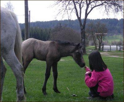 """""""L'homme et le cheval sont dans deux mondes différents ! Ce qui compte, ce n'est pas la méthode employée mais la façon d'aborder les choses."""" Michel Macé"""