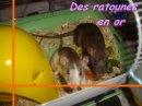 Photo de les-rattounette-x