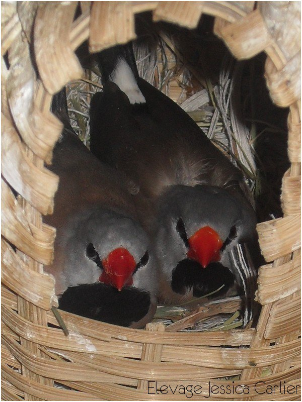 Nous sommes si beaux dans notre petit nid pour la nuit.. Bonne nuit les amis..