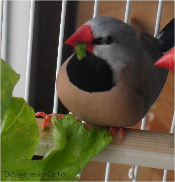Mon mâle bavette qui déguste sa salade ;-D