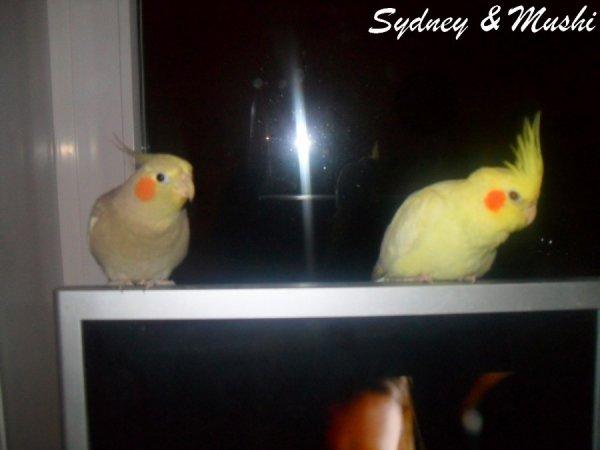 Sydney & Mushi sur l'écran d'ordinateur