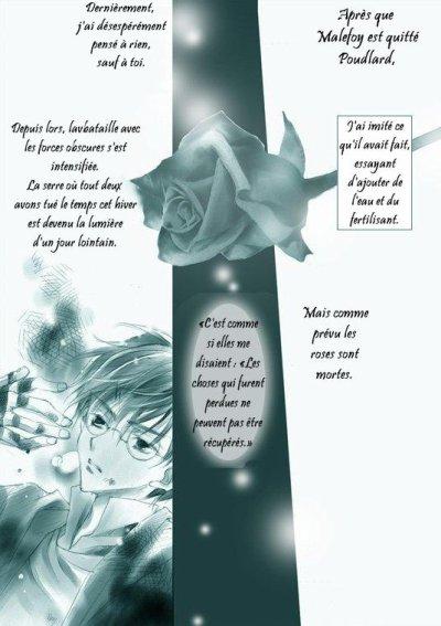 Winter Rose - 7