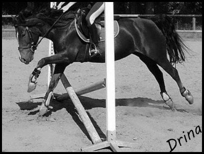 Les chevaux sont pour l'homme ce que les ailes sont pour l'oiseau...