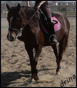 Monter à cheval, c'est être entre ciel et terre à une hauteur qui n'existe pas
