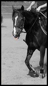 le cheval est un cadeau de Dieu a l'homme