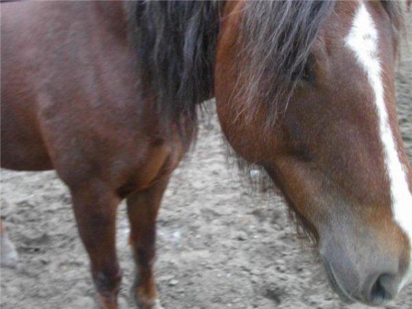"""""""l'art equestre c'est la perfection des choses simples"""""""