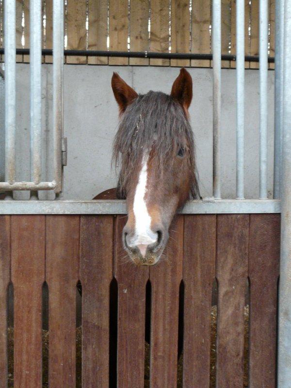 le cheval idéal existe c'est celui auquel on ne demande que ce qu'il peut nous donner.