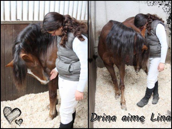 Le cheval est un noble animal