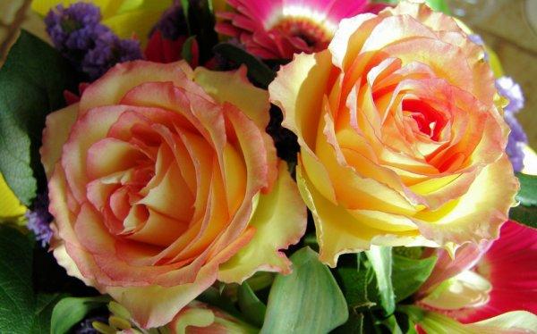 quand les fleurs vous ravivent le coeur !!
