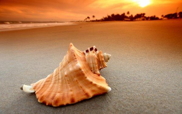 le coquillage solitaire d une plage désertée au coucher de soleil