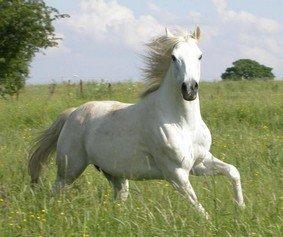 le moine et le cheval blanc...