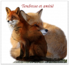 Tendresse & amitié